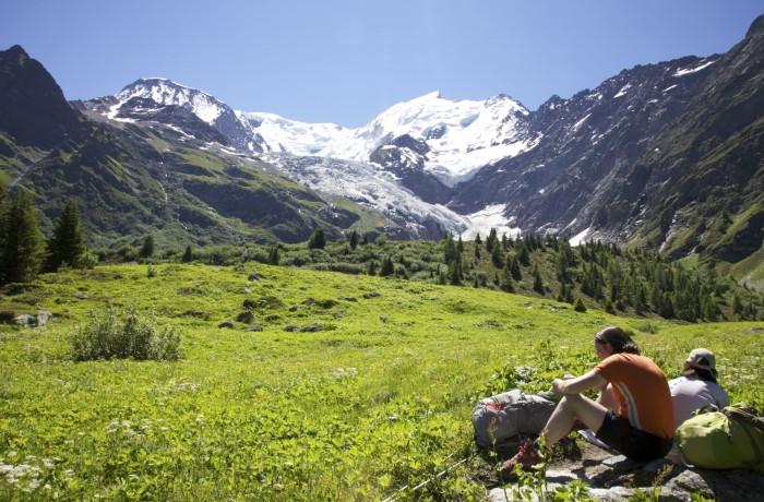 Alpine meadow, Glacier de Bionnassay